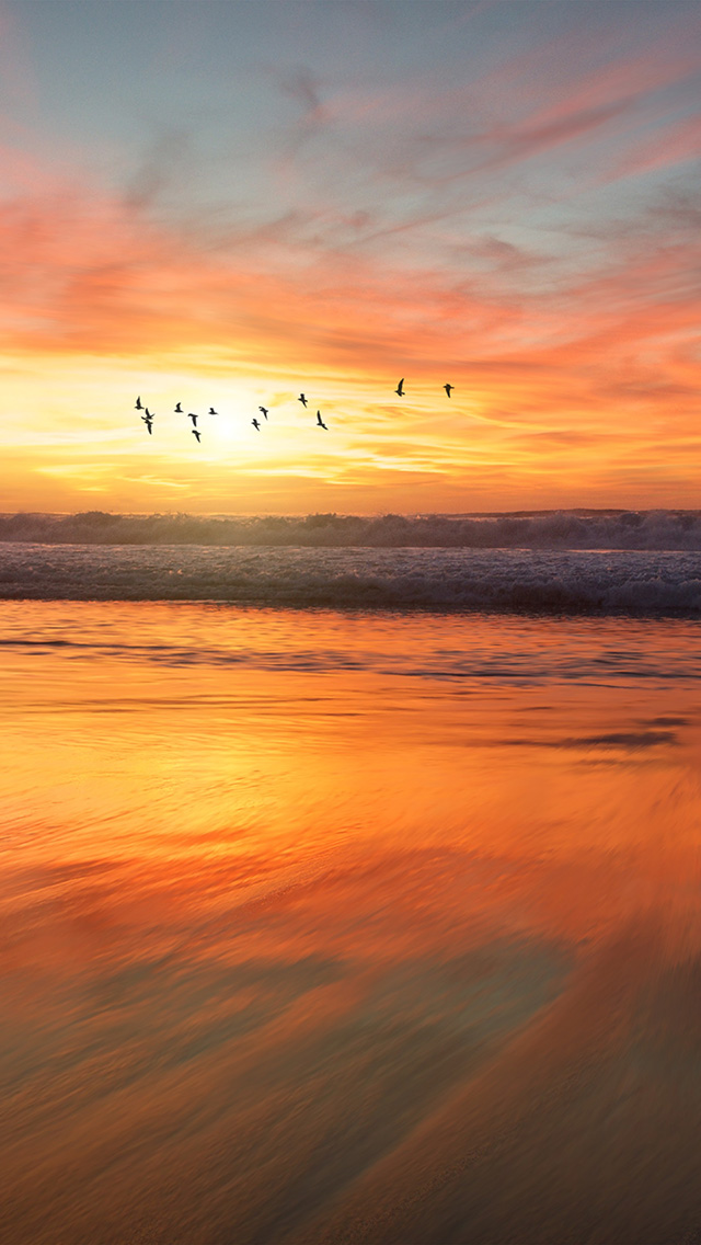 freeios8.com-iphone-4-5-6-plus-ipad-ios8-nm03-sunset-sea-nature-orange-summer-sky-bird
