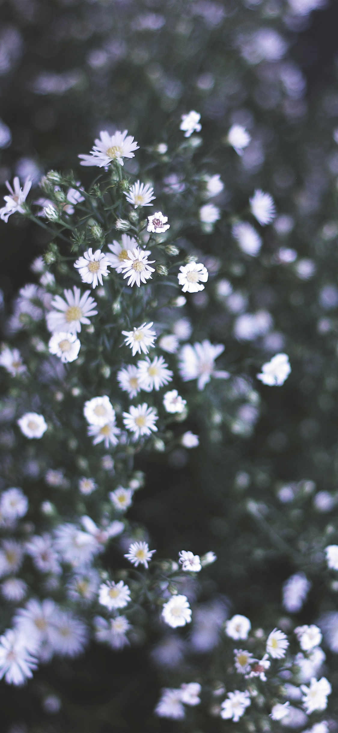 iPhoneXpapers.com-Apple-iPhone-wallpaper-nm05-flower-white-spring-nature