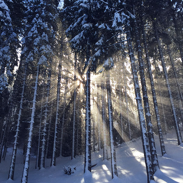 iPapers.co-Apple-iPhone-iPad-Macbook-iMac-wallpaper-nm60-wood-snow-winter-light-sun-nature-wallpaper
