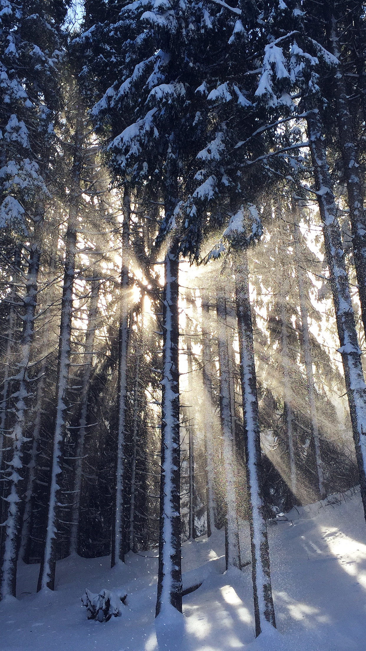 Wallpaper winter the sky the sun snow mountains nature house