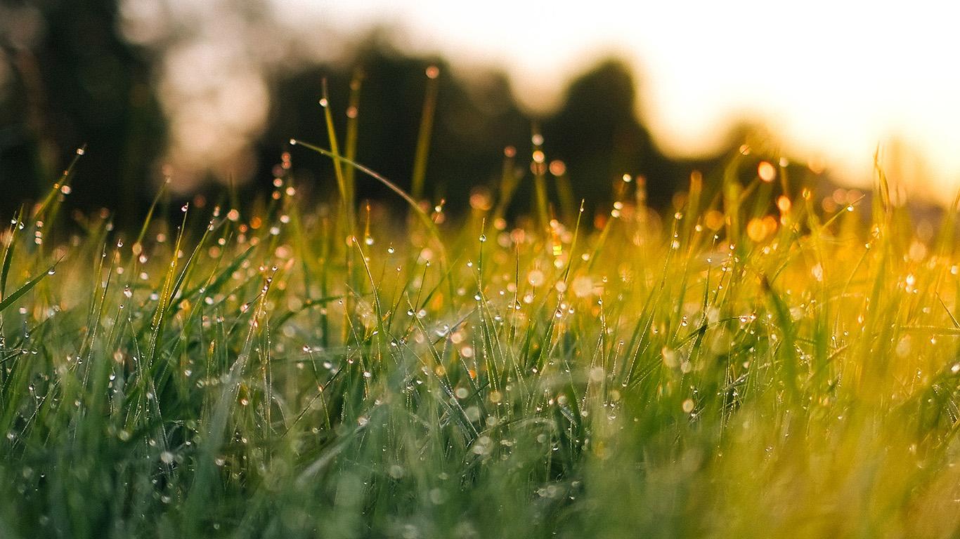 desktop-wallpaper-laptop-mac-macbook-air-nm66-lawn-green-nature-sunset-light-bokeh-spring-wallpaper