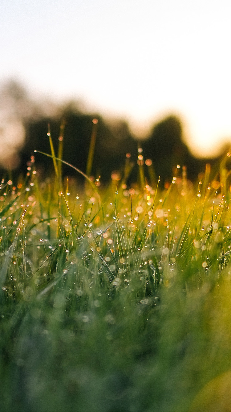iPhone6papers.co-Apple-iPhone-6-iphone6-plus-wallpaper-nm66-lawn-green-nature-sunset-light-bokeh-spring