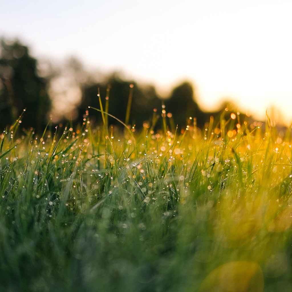 android-wallpaper-nm66-lawn-green-nature-sunset-light-bokeh-spring-wallpaper