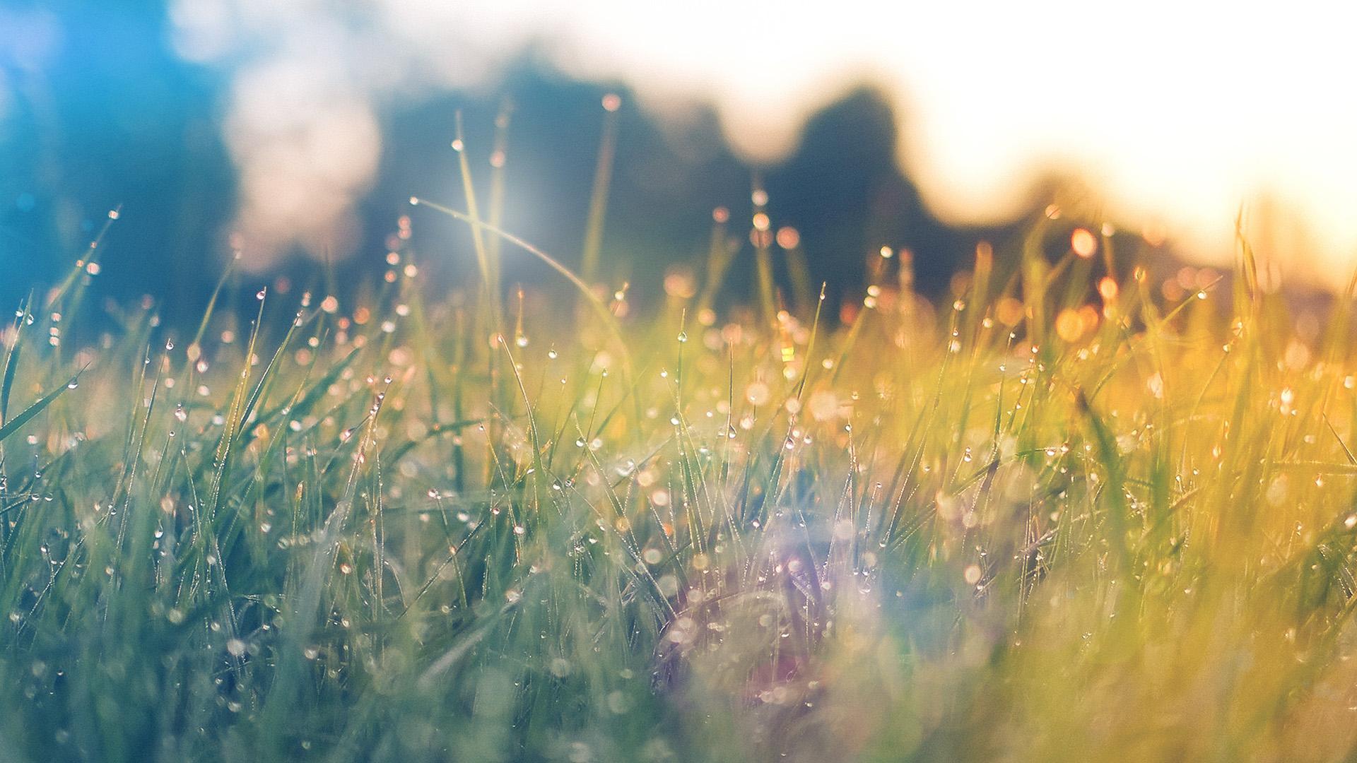 nm68-lawn-green-nature-sunset-light-bokeh-spring-flare ...