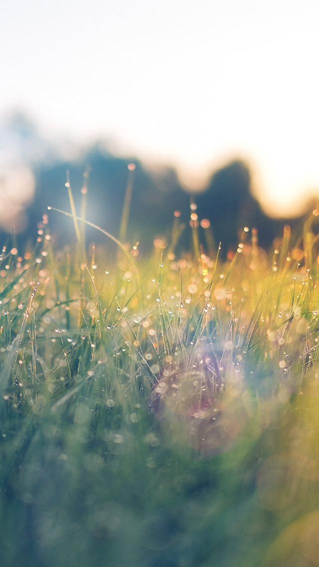 freeios8.com-iphone-4-5-6-plus-ipad-ios8-nm68-lawn-green-nature-sunset-light-bokeh-spring-flare-happy