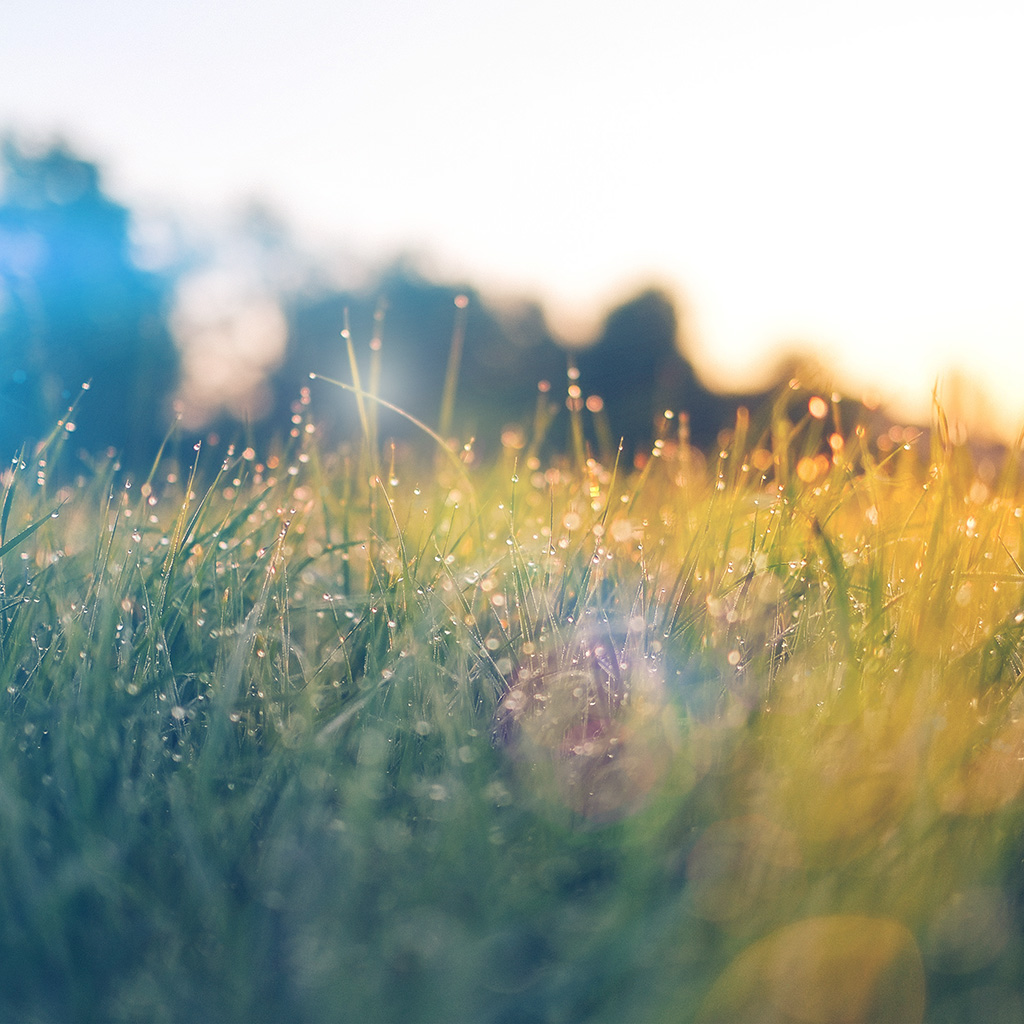 wallpaper-nm68-lawn-green-nature-sunset-light-bokeh-spring-flare-happy-wallpaper