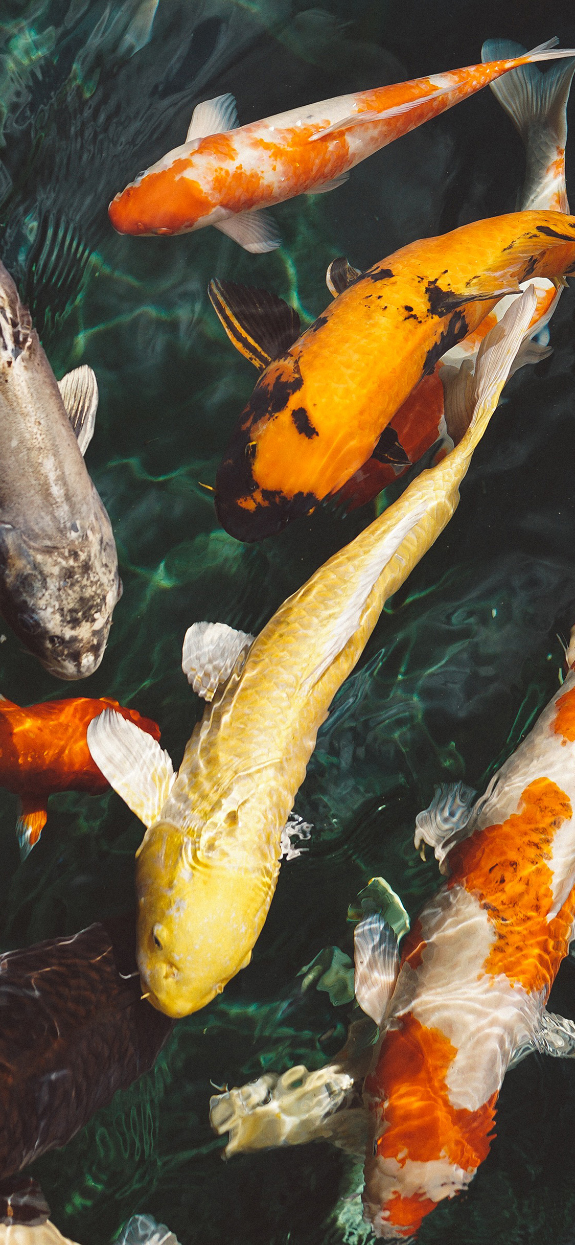 iPhoneXpapers.com-Apple-iPhone-wallpaper-nm71-fish-water-animal-swim