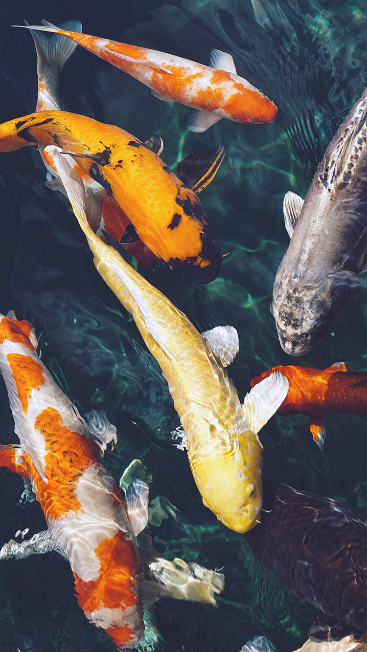 iPhone7papers.com-Apple-iPhone7-iphone7plus-wallpaper-nm72-fish-water-animal-swim-blue