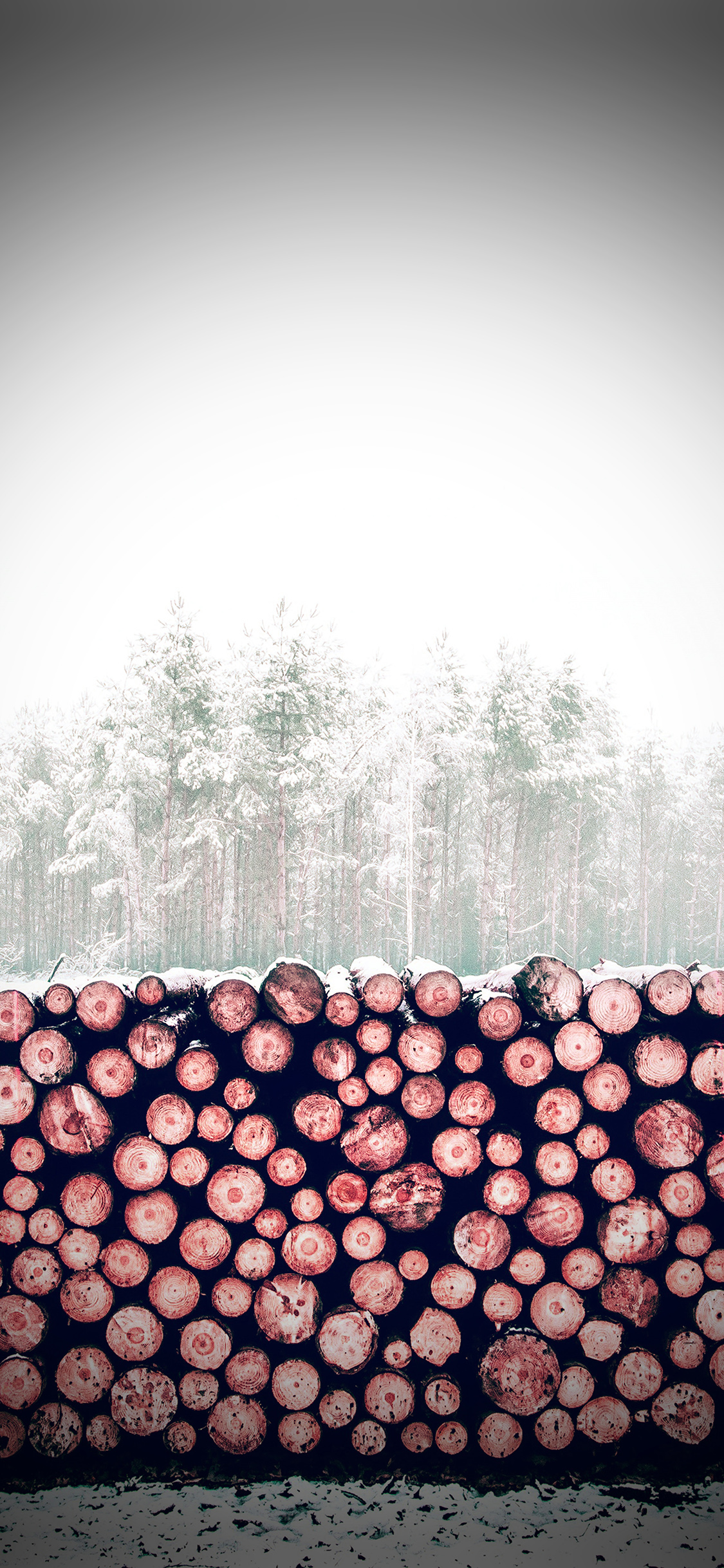 iPhonexpapers.com-Apple-iPhone-wallpaper-nm98-winter-snow-wood-forest-nature-redvignette