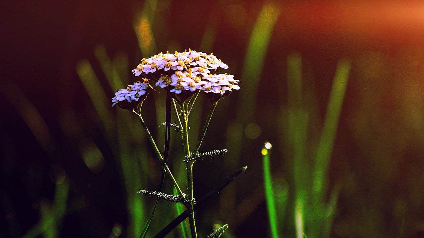 desktop-wallpaper-laptop-mac-macbook-air-nn28-spring-flower-bokeh-beautiful-blue-flare-wallpaper