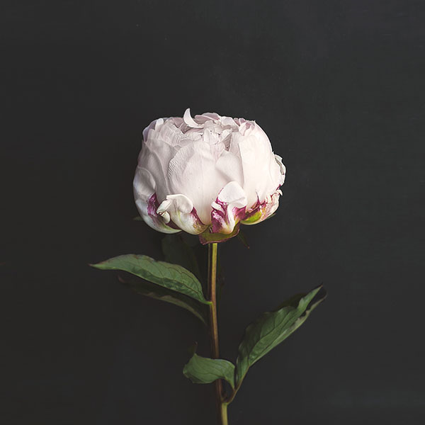 iPapers.co-Apple-iPhone-iPad-Macbook-iMac-wallpaper-nn37-flower-white-dark-nature-wallpaper