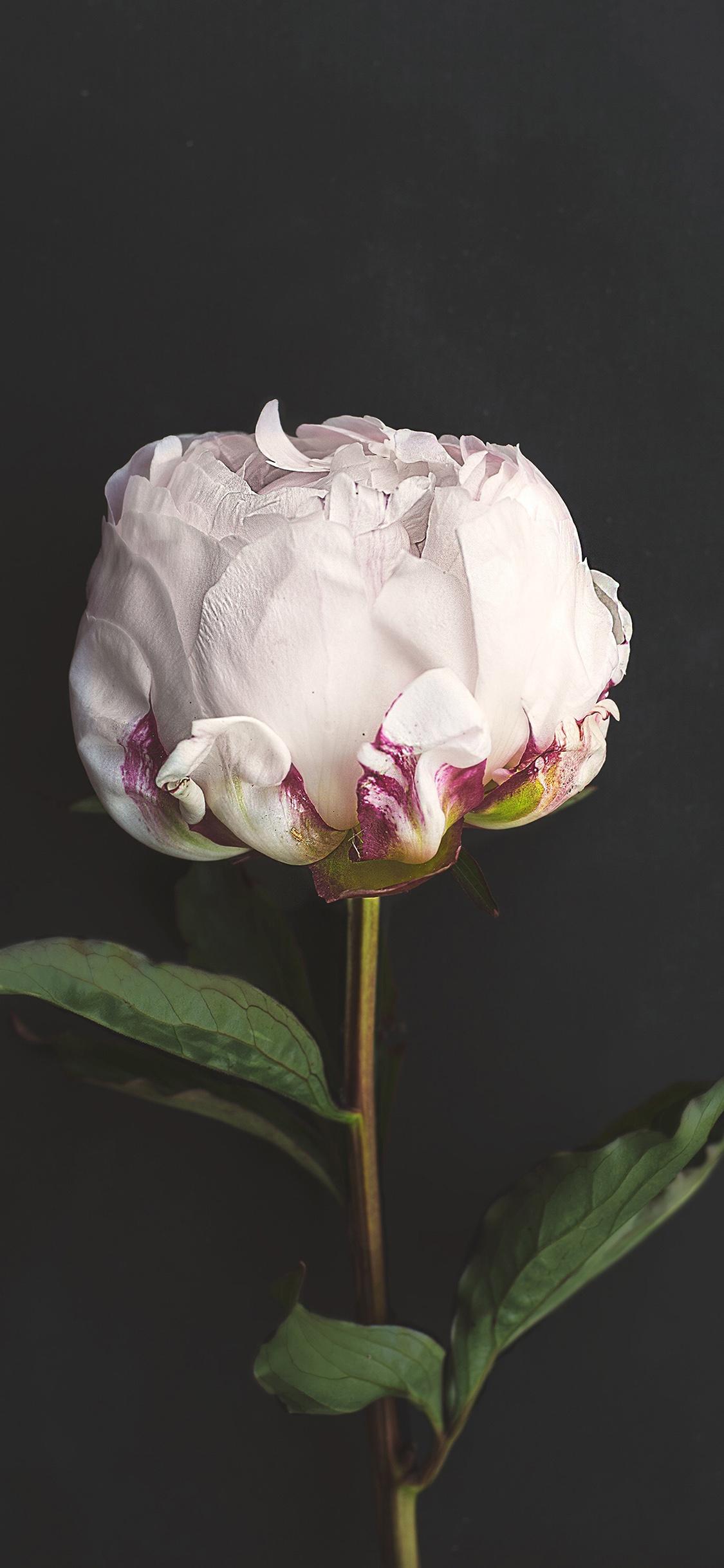 iPhoneXpapers.com-Apple-iPhone-wallpaper-nn37-flower-white-dark-nature