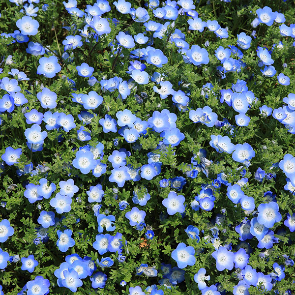 iPapers.co-Apple-iPhone-iPad-Macbook-iMac-wallpaper-nn48-flower-spring-blue-nature-wallpaper