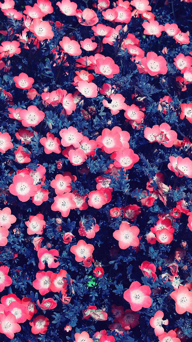 iPhone7papers.com-Apple-iPhone7-iphone7plus-wallpaper-nn50-flower-spring-red-nature