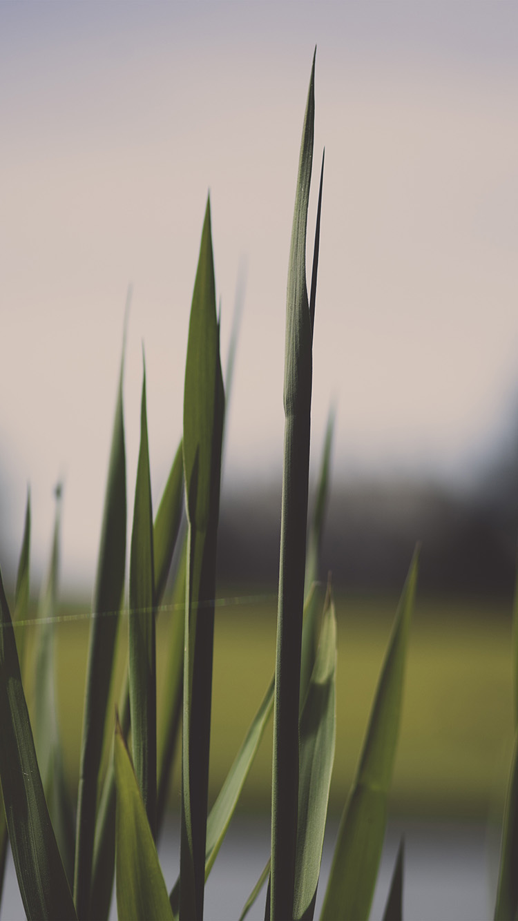 iPhone6papers.co-Apple-iPhone-6-iphone6-plus-wallpaper-nn91-lawn-flower-green-bokeh-nature
