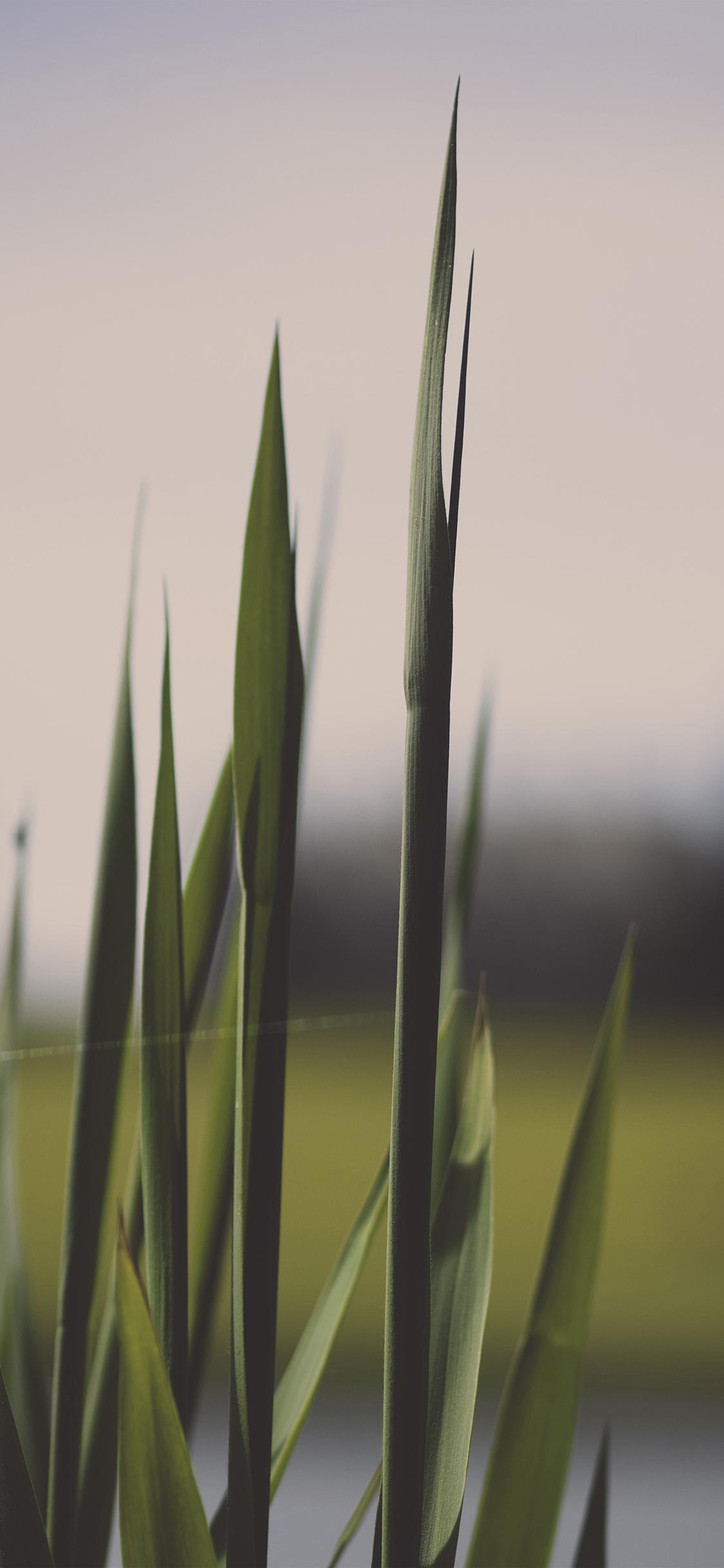 iPhoneXpapers.com-Apple-iPhone-wallpaper-nn91-lawn-flower-green-bokeh-nature