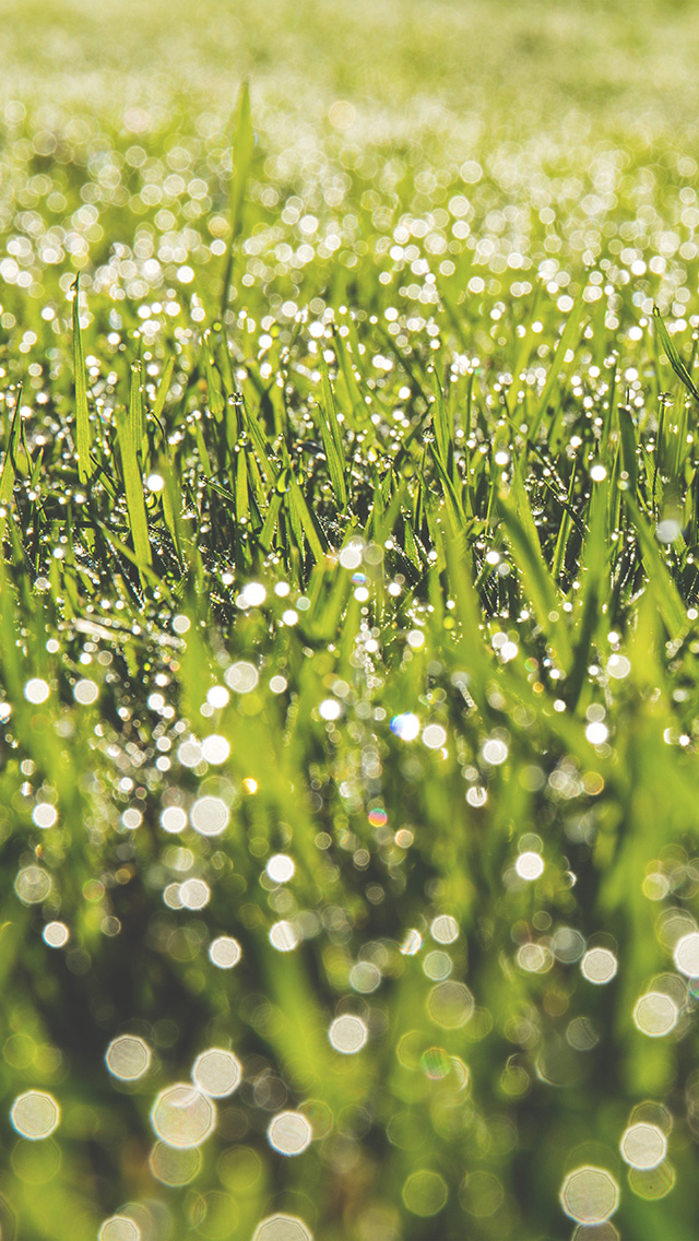 freeios8.com-iphone-4-5-6-plus-ipad-ios8-no20-lawn-green-spring-bokeh-light