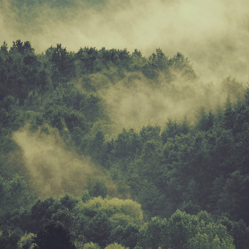 wallpaper-no22-forest-wood-fog-nature-green-mountain-wallpaper