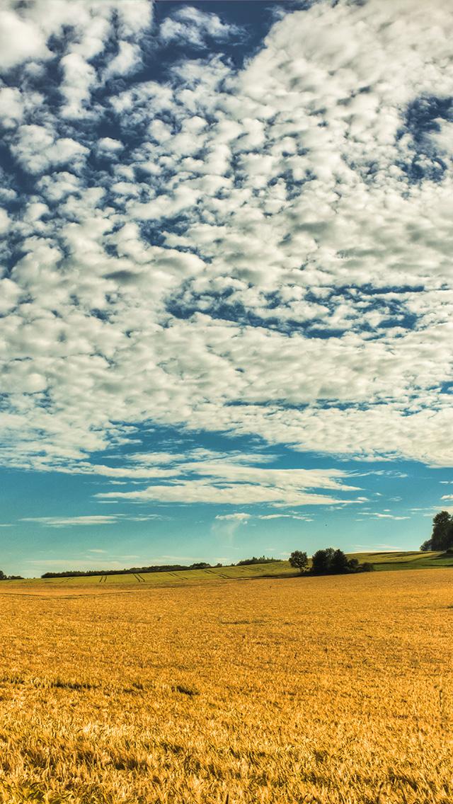 freeios8.com-iphone-4-5-6-plus-ipad-ios8-no26-fall-yellow-field-cloud-nature