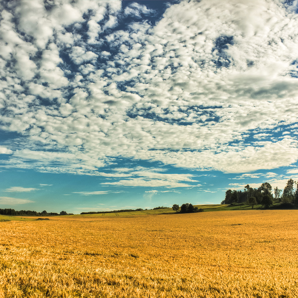 wallpaper-no26-fall-yellow-field-cloud-nature-wallpaper