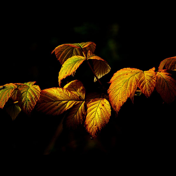 iPapers.co-Apple-iPhone-iPad-Macbook-iMac-wallpaper-no32-fall-leaf-dark-nature-wallpaper