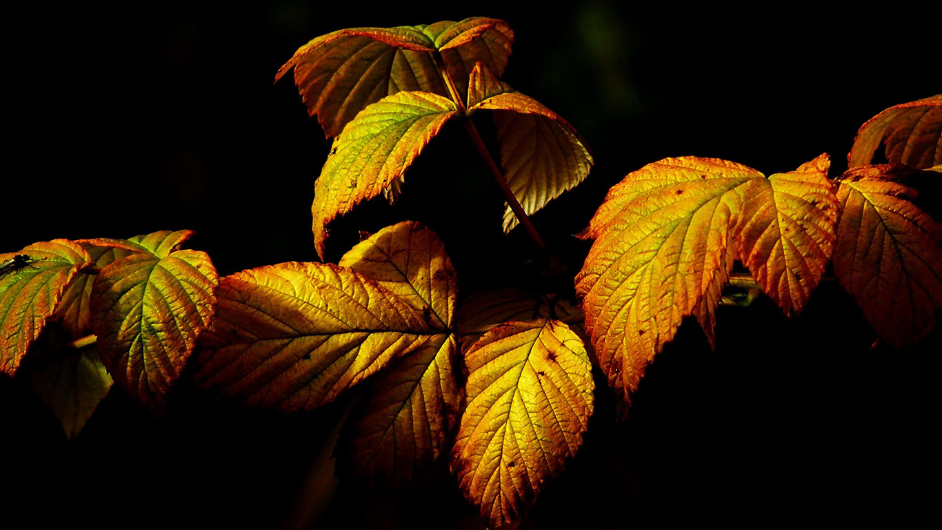 desktop-wallpaper-laptop-mac-macbook-air-no32-fall-leaf-dark-nature-wallpaper