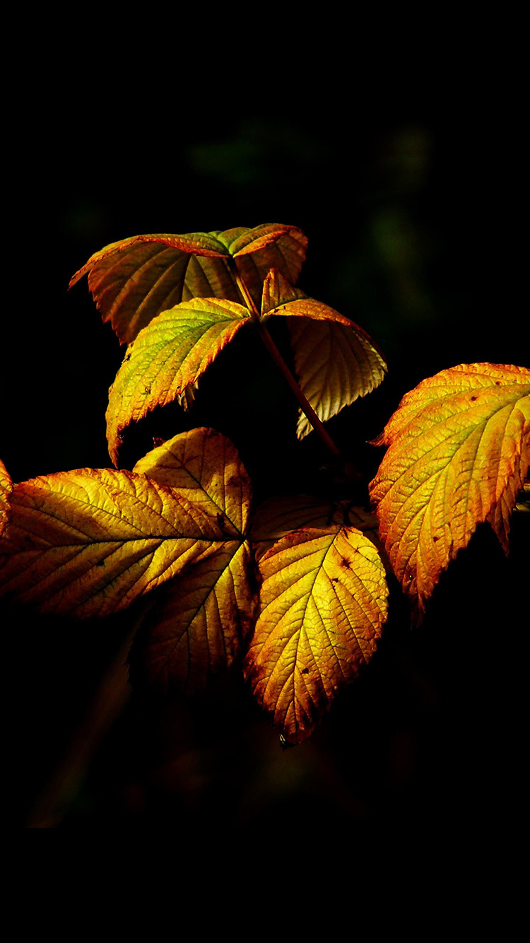 iPhone6papers.co-Apple-iPhone-6-iphone6-plus-wallpaper-no32-fall-leaf-dark-nature