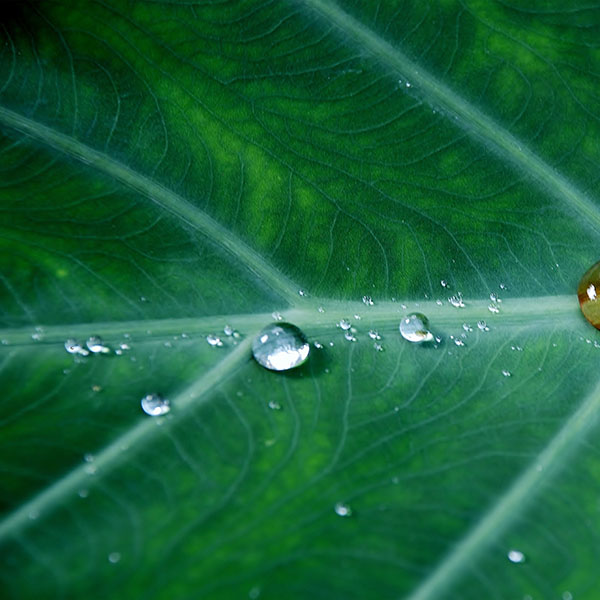 iPapers.co-Apple-iPhone-iPad-Macbook-iMac-wallpaper-no36-leaf-water-spring-green-nature-rain-wallpaper