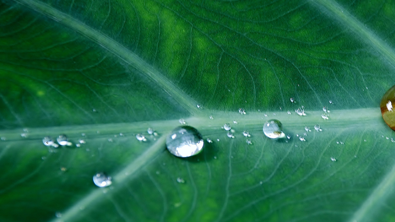 desktop-wallpaper-laptop-mac-macbook-air-no36-leaf-water-spring-green-nature-rain-wallpaper