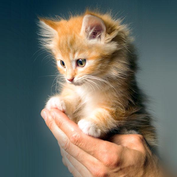 iPapers.co-Apple-iPhone-iPad-Macbook-iMac-wallpaper-no47-animal-cute-kitten-cat-nature-wallpaper