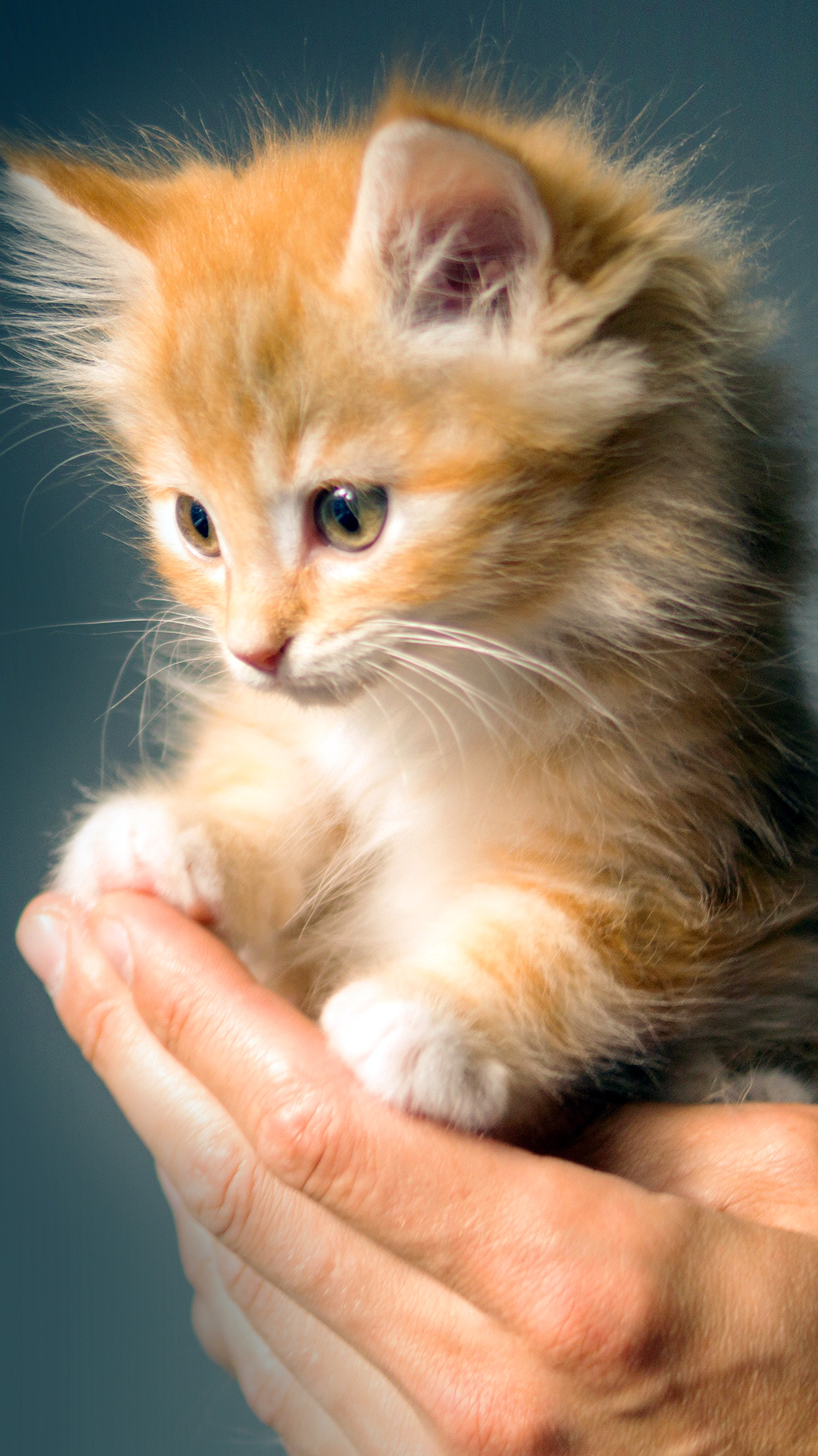 Iphonexpapers Com Iphone X Wallpaper No47 Animal Cute Kitten Cat Nature