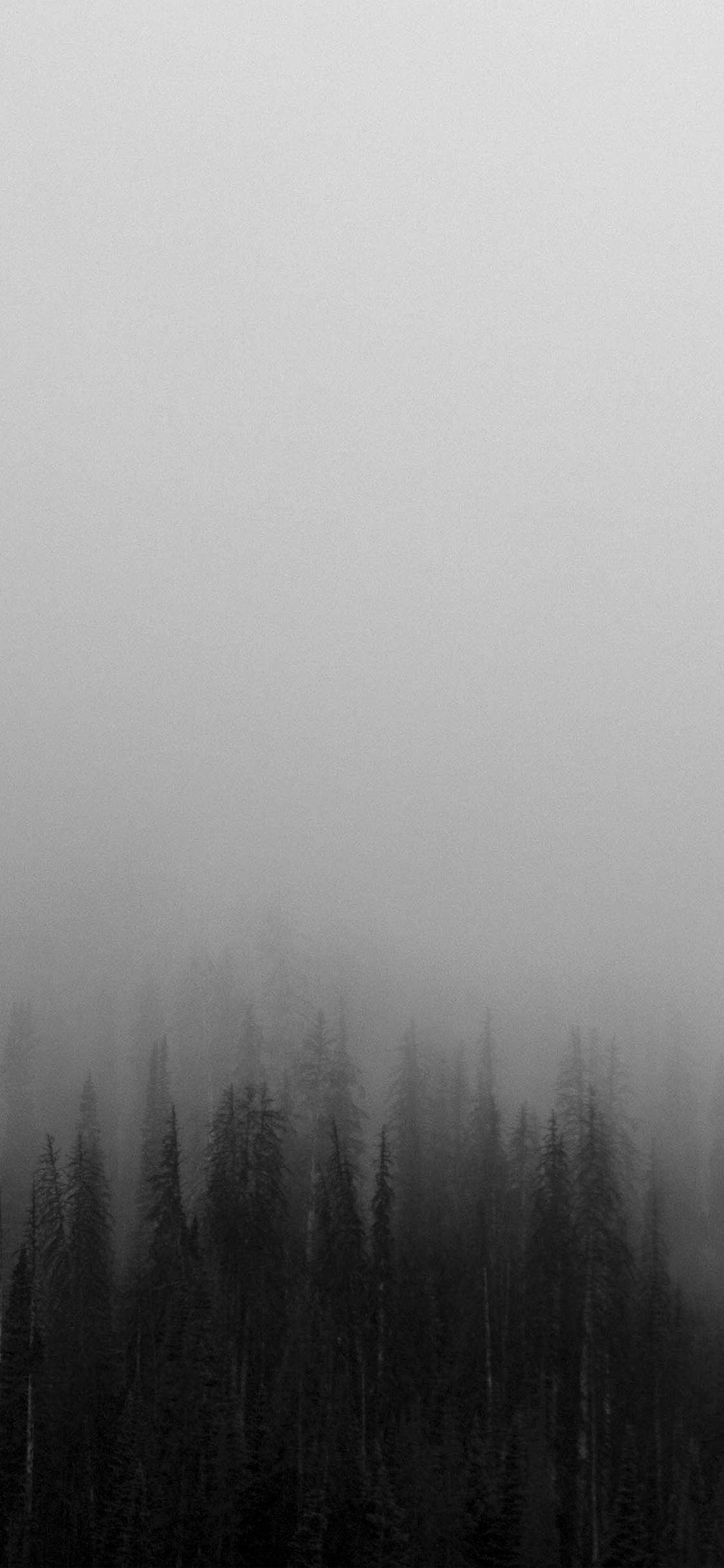 iPhoneXpapers.com-Apple-iPhone-wallpaper-no61-fog-minimal-mountain-wood-nature