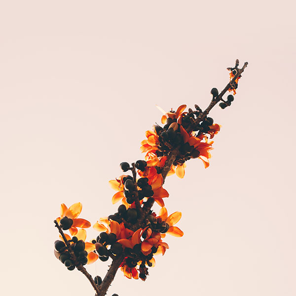 iPapers.co-Apple-iPhone-iPad-Macbook-iMac-wallpaper-no89-flower-tree-red-nature-simple-wallpaper