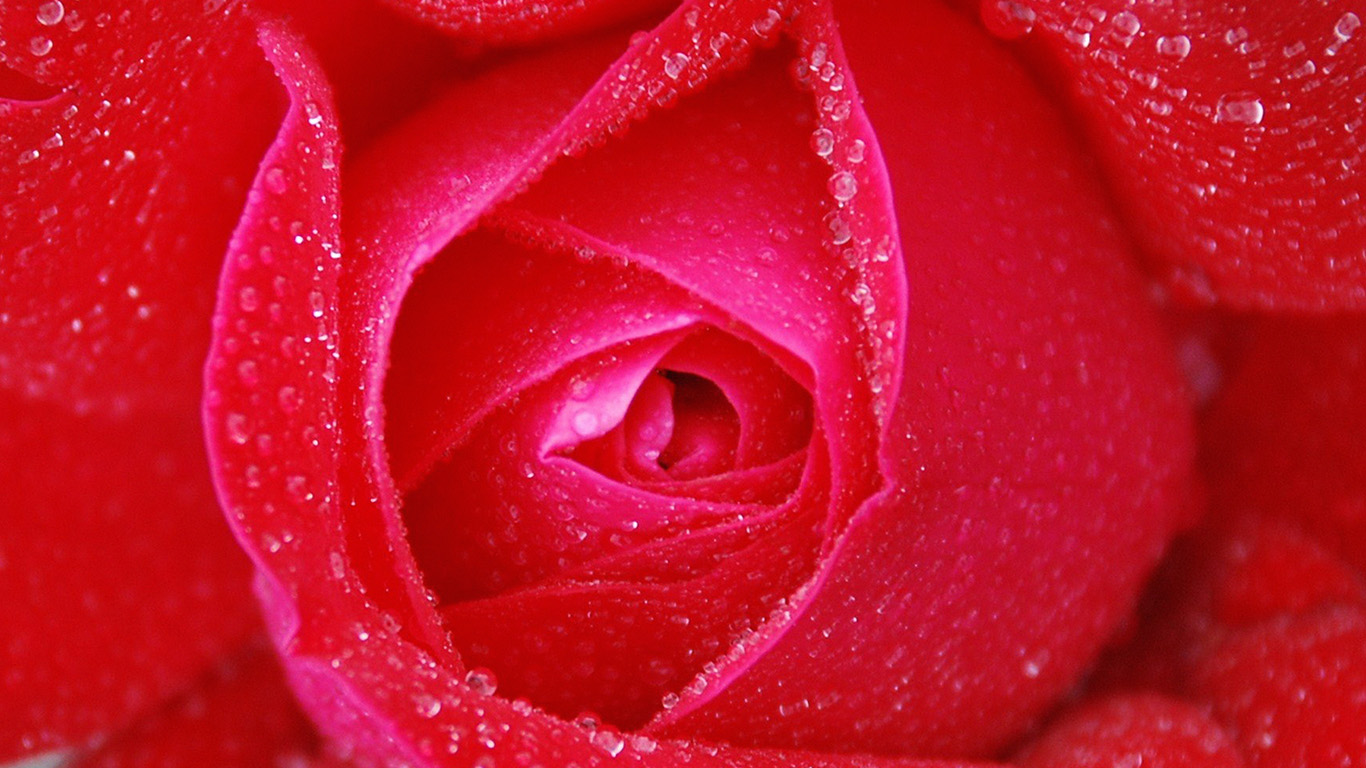 desktop-wallpaper-laptop-mac-macbook-air-no95-rose-red-rain-zoom-closeup-nature-wallpaper