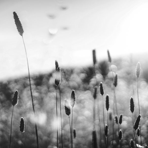 iPapers.co-Apple-iPhone-iPad-Macbook-iMac-wallpaper-np01-dream-flower-morning-nature-fog-flare-bw-dark-wallpaper
