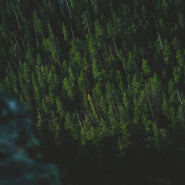 iPapers.co-Apple-iPhone-iPad-Macbook-iMac-wallpaper-np02-wood-green-summer-mountain-nature-wallpaper