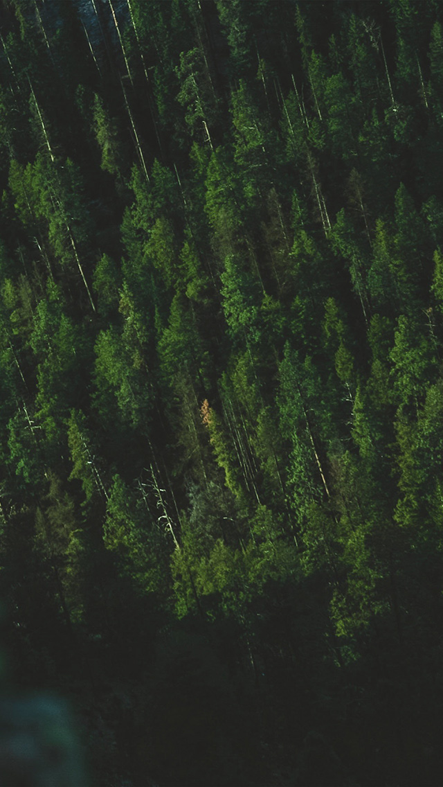 freeios8.com-iphone-4-5-6-plus-ipad-ios8-np02-wood-green-summer-mountain-nature