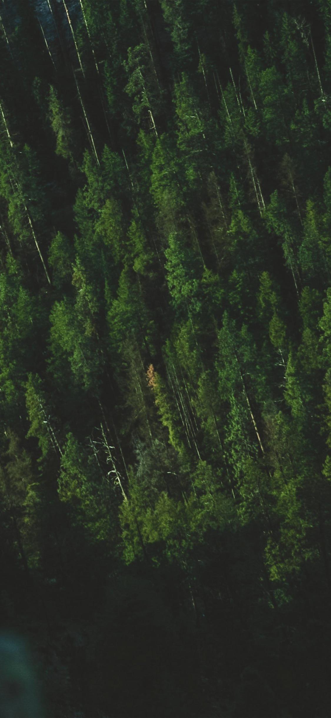 iPhoneXpapers.com-Apple-iPhone-wallpaper-np02-wood-green-summer-mountain-nature