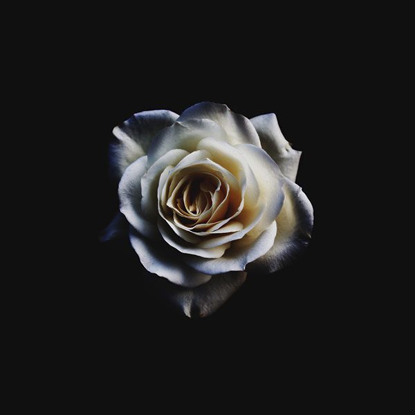 iPapers.co-Apple-iPhone-iPad-Macbook-iMac-wallpaper-np15-flower-white-dark-minimal-nature-wallpaper