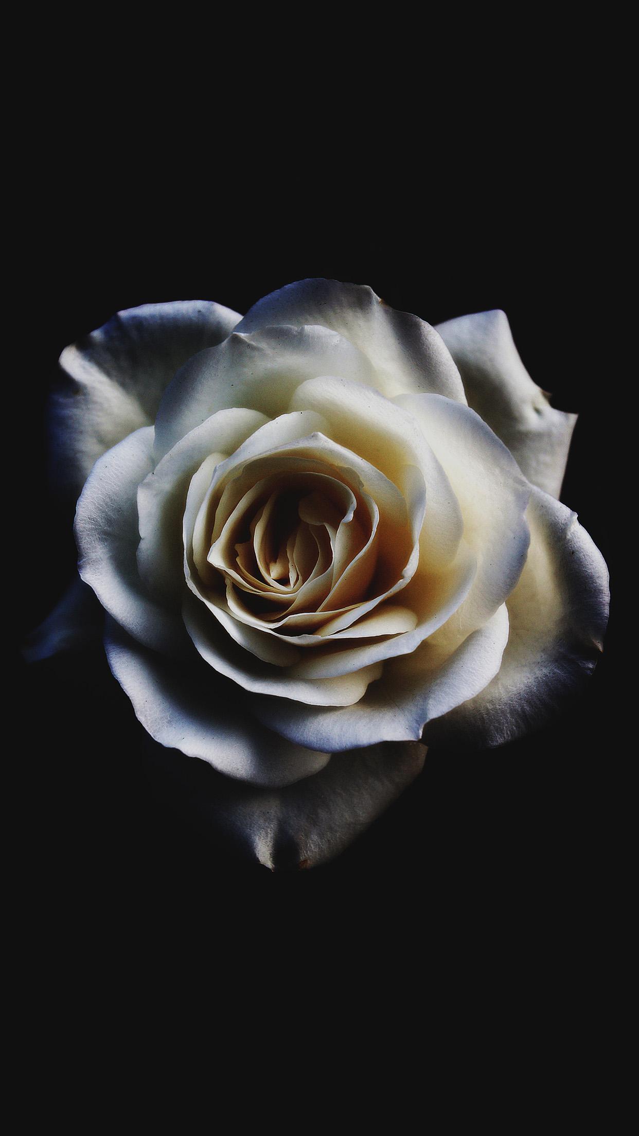 wallpaper iphone flower white