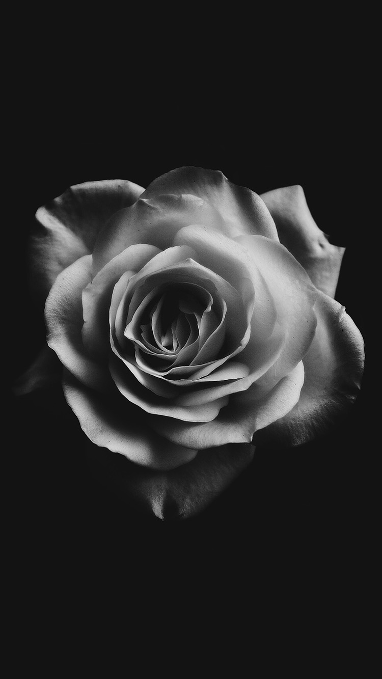 iPhone7papers.com-Apple-iPhone7-iphone7plus-wallpaper-np18-flower-white-dark-minimal-nature-bw