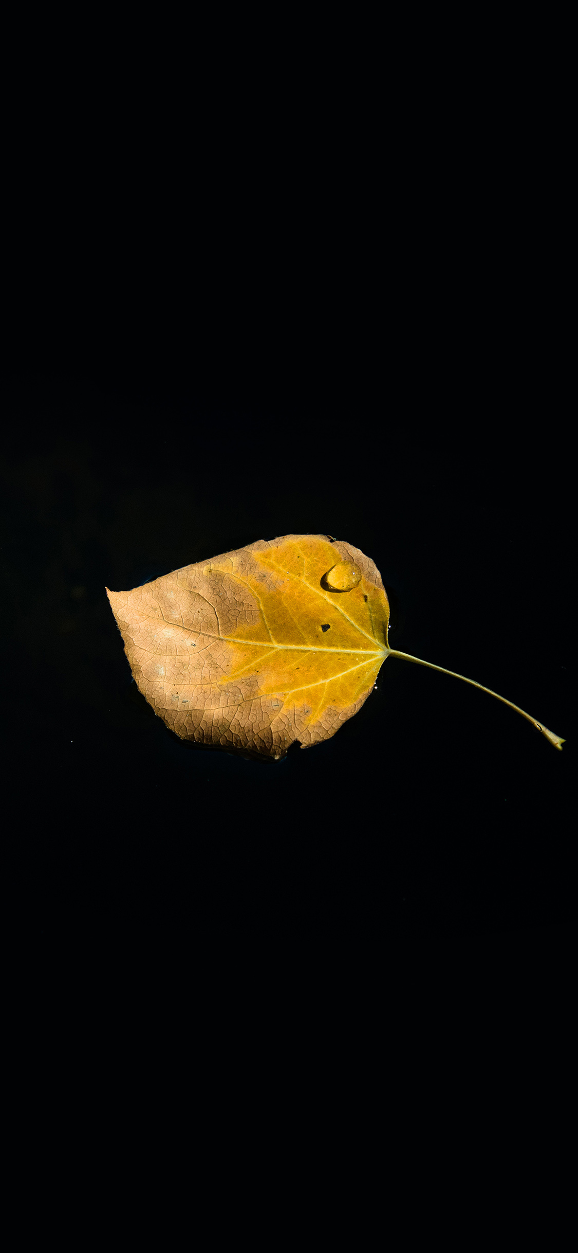 iPhoneXpapers.com-Apple-iPhone-wallpaper-np56-single-leaf-minimal-dark-nature