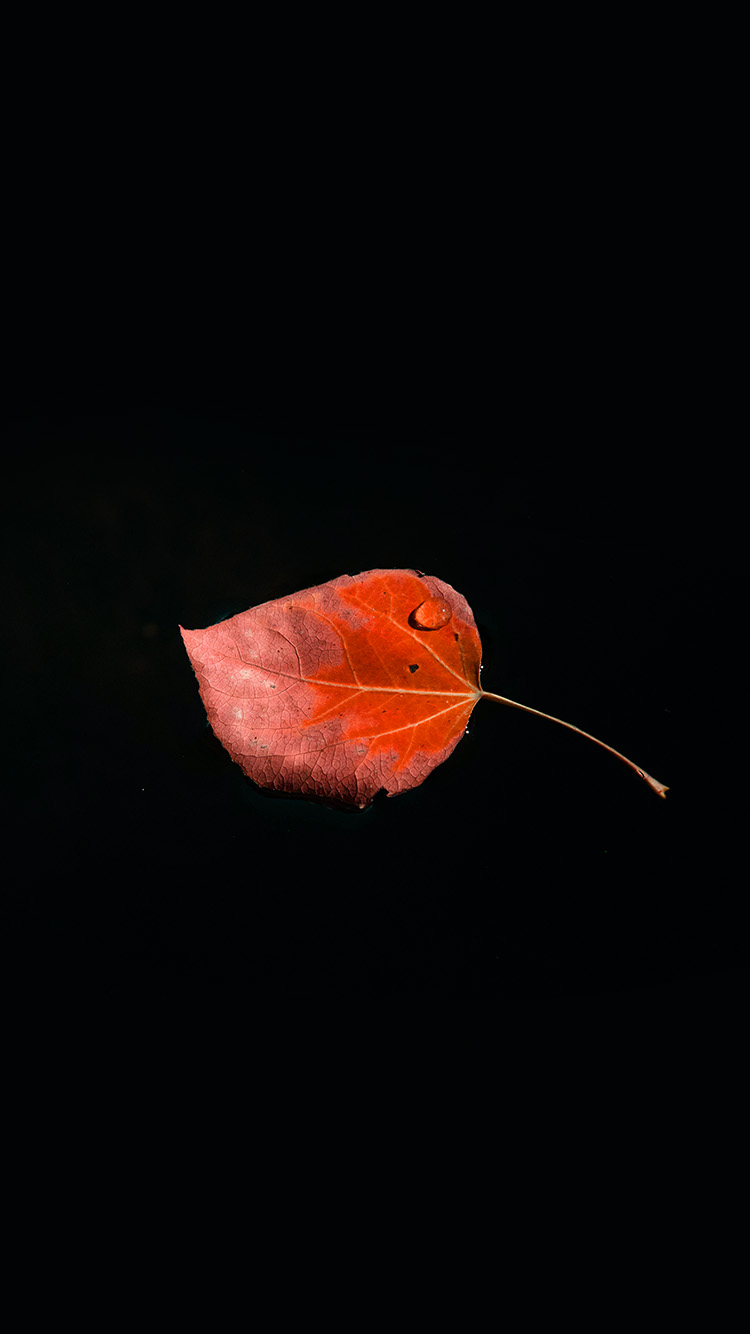 iPhone7papers.com-Apple-iPhone7-iphone7plus-wallpaper-np57-single-leaf-minimal-dark-nature-red