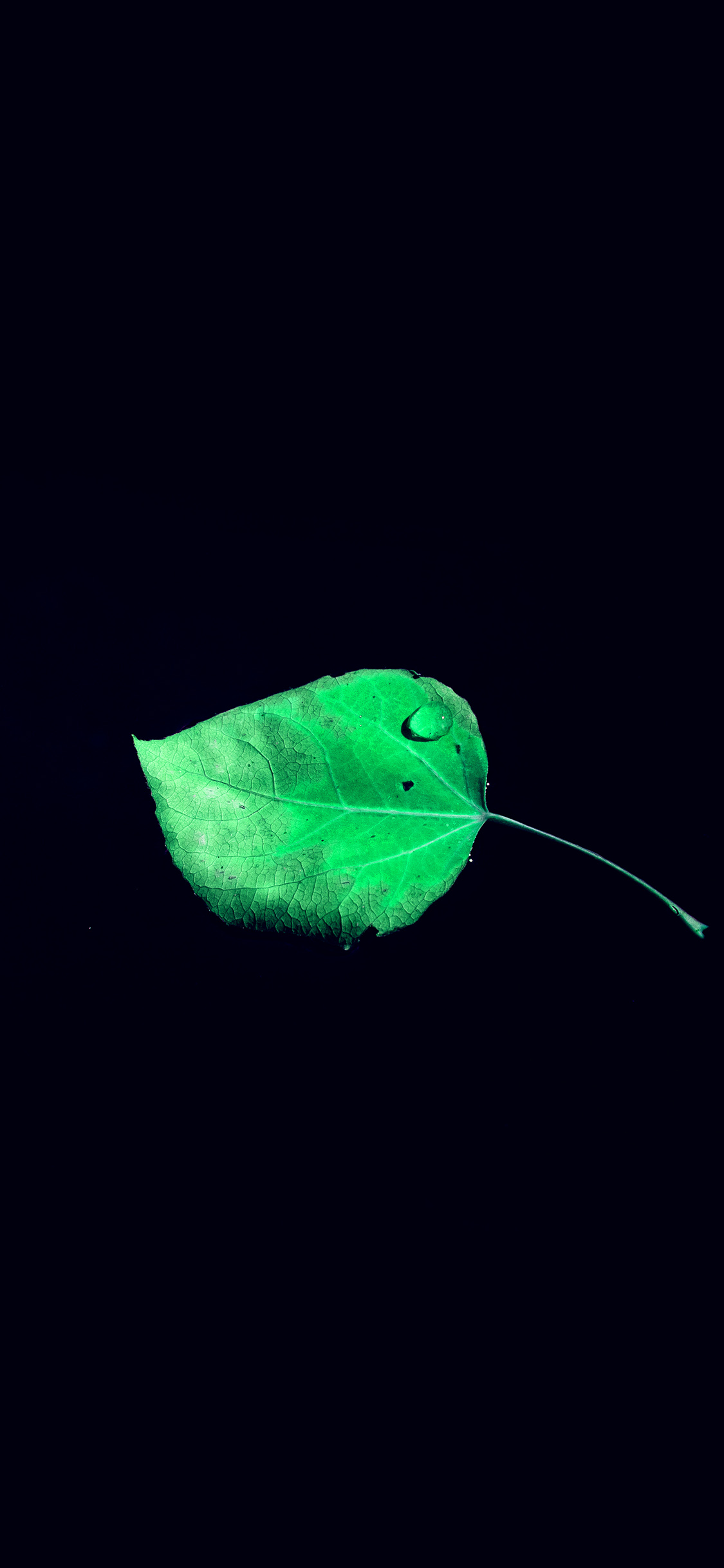 iPhonexpapers.com-Apple-iPhone-wallpaper-np58-single-leaf-minimal-dark-nature-blue