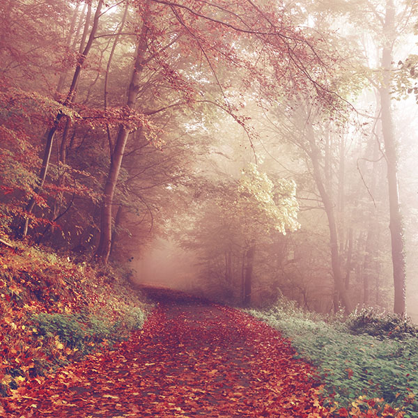 iPapers.co-Apple-iPhone-iPad-Macbook-iMac-wallpaper-np70-fall-mountain-road-romantic-red-nature-wallpaper