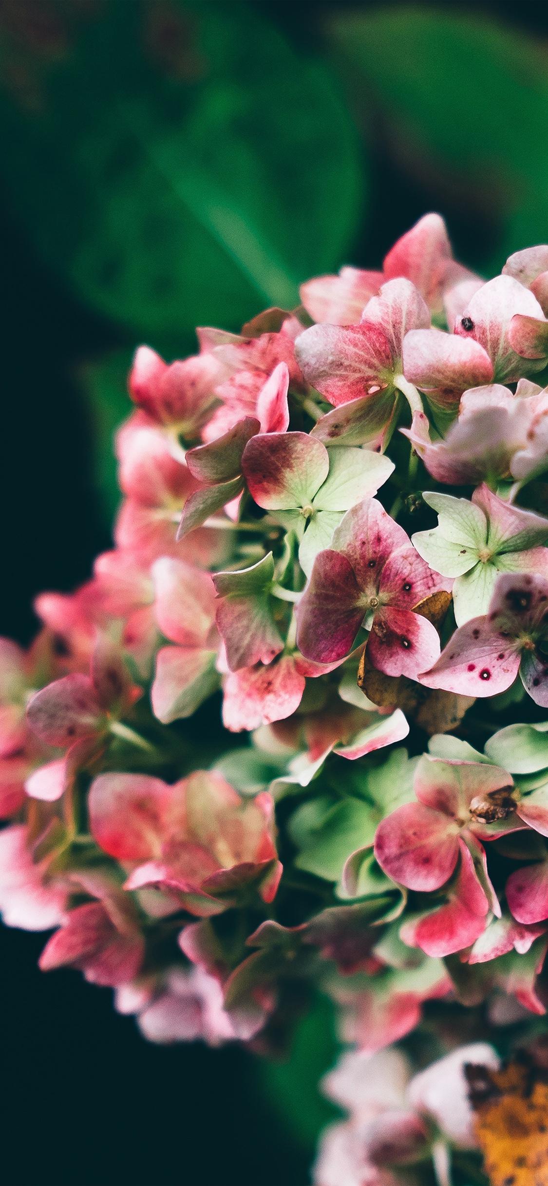 iPhoneXpapers.com-Apple-iPhone-wallpaper-np74-flower-bokeh-romantic-nature