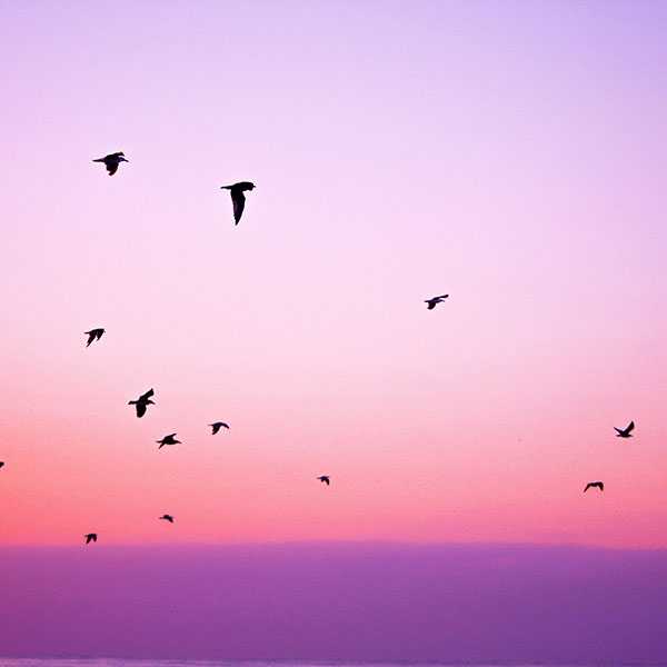 iPapers.co-Apple-iPhone-iPad-Macbook-iMac-wallpaper-np83-sky-bird-pink-red-sunset-nature-wallpaper