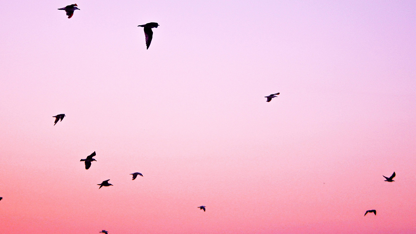 desktop-wallpaper-laptop-mac-macbook-air-np83-sky-bird-pink-red-sunset-nature-wallpaper