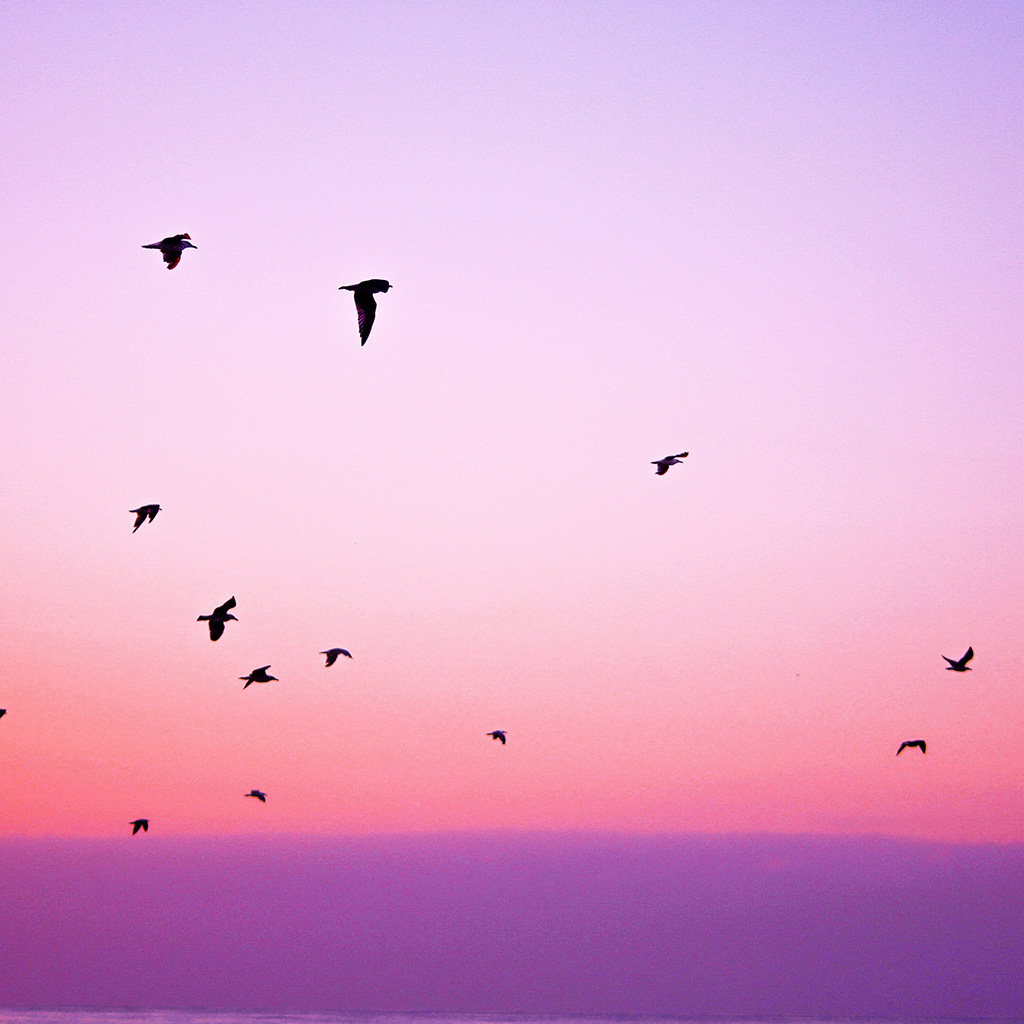 animal sky