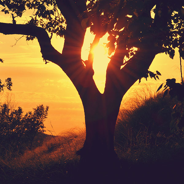 iPapers.co-Apple-iPhone-iPad-Macbook-iMac-wallpaper-np92-sunset-through-tree-afternoon-mountain-nature-wallpaper